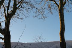 Fondo, árboles y nieve de la escena del invierno en fondo del cielo imágenes de archivo libres de regalías