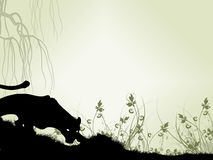Fondo 1 del puma Foto de archivo libre de regalías