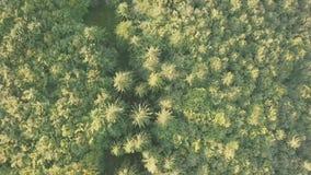 Fondo aéreo con Forest Aerial View conífero metrajes