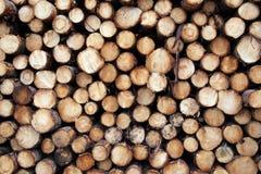 Fondo abbattuto dei pini Immagini Stock Libere da Diritti