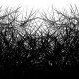 Fondo abstracto blanco y negro con las líneas de las sombras de ramas de las plantas foto de archivo