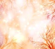 Fondo abstracto con la frontera del árbol Imagen de archivo libre de regalías