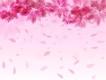 Fondo abstracto con las flores rosadas y los pétalos que caen Foto de archivo libre de regalías