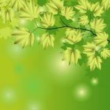 Fondo abstracto con las hojas verdes. Imágenes de archivo libres de regalías