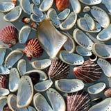 Fondo abstracto con los shelles del mar Imagen de archivo