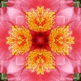 Fondo abstracto de Camelia Fotografía de archivo