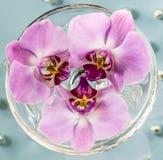 Fondo abstracto de flores Foto de archivo libre de regalías