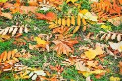 Fondo abstracto de hojas caidas Foto de archivo libre de regalías
