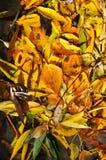 Fondo abstracto de hojas caidas Fotografía de archivo libre de regalías