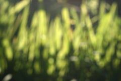 Fondo abstracto de la falta de definición del verde de la naturaleza Fotos de archivo