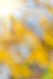Fondo abstracto de la naturaleza Imagen de archivo