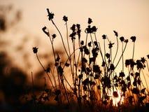 Fondo abstracto de la naturaleza del verano con la hierba en el prado y la puesta del sol en la parte posterior Fotos de archivo libres de regalías