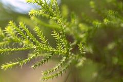 Fondo abstracto de la naturaleza Tiro cosechado de hojas verdes fotografía de archivo libre de regalías