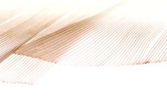 Fondo abstracto de la pluma Fotografía de archivo libre de regalías