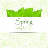 Fondo abstracto de la primavera con las hojas Foto de archivo libre de regalías