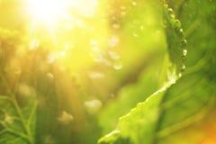 fondo abstracto de la primavera del arte o fondo verde del verano imagenes de archivo