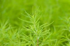 Fondo abstracto de la vegetación del verdor Fotografía de archivo