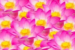 Fondo abstracto de las flores de loto Fotos de archivo
