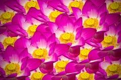 Fondo abstracto de las flores de loto Imagenes de archivo