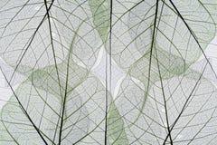 Fondo abstracto de las hojas de otoño Fotografía de archivo libre de regalías