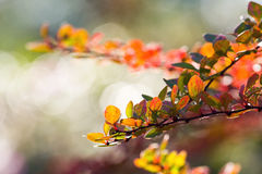 Fondo abstracto de las hojas de otoño foto de archivo