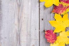 Fondo abstracto de las hojas de otoño coloridas Fotos de archivo libres de regalías