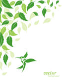 Fondo abstracto de las hojas y de los colibríes del verde Imágenes de archivo libres de regalías