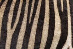 Fondo abstracto de las rayas de la cebra Fotos de archivo libres de regalías
