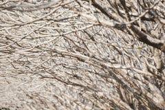 Fondo abstracto de los branchs del árbol del Frangipani Imagenes de archivo