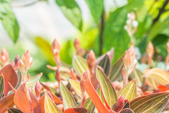 Fondo abstracto de plantas ornamentales, orquídea de la naturaleza de joya Imagen de archivo