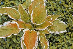 Fondo abstracto de plantas fotos de archivo