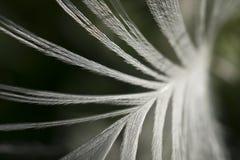 Fondo abstracto de una pluma Fotografía de archivo libre de regalías