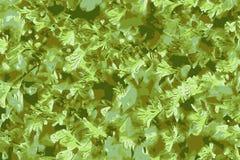 Fondo abstracto de una selva tropical tropical y de hojas verdes fluorescentes ilustración del vector