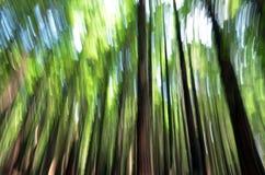 Fondo abstracto del bosque Fotografía de archivo