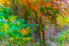 Fondo abstracto del bosque del otoño Foto de archivo libre de regalías