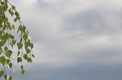 Fondo abstracto del cielo con las ramas verdes Imagen de archivo libre de regalías