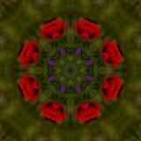 fondo abstracto del estampado de flores de un caleidoscopio Imagenes de archivo