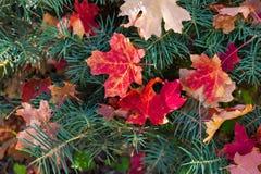 Fondo abstracto del follaje de otoño imágenes de archivo libres de regalías