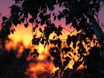Fondo abstracto del follaje, rama de árbol hermosa, luz caliente del sol fotografía de archivo