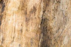 Fondo abstracto del modelo de la textura de la corteza de madera de Brown Imágenes de archivo libres de regalías
