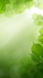 Fondo abstracto del papel pintado del verde de la primavera fotografía de archivo