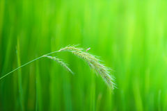 Fondo abstracto del prado borroso Imagen de archivo libre de regalías
