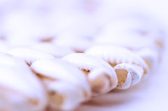 Fondo abstracto del shell del mar Fotos de archivo