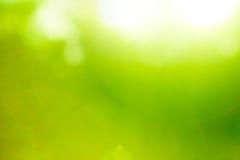 Fondo abstracto del verde de la naturaleza. Imágenes de archivo libres de regalías