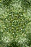 Fondo abstracto del verdor, hojas verdes con efecto del caleidoscopio fotos de archivo libres de regalías