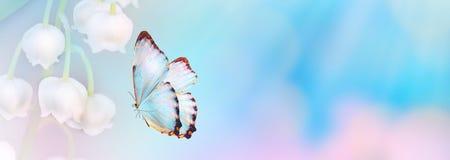 Fondo abstracto floral del color azul violeta Ciérrese encima de la flor y de la mariposa rosadas del cosmos con el espacio de la fotos de archivo libres de regalías