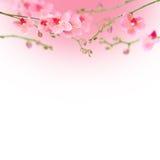 Fondo abstracto floral hermoso, orquídeas aisladas en blanco Fotografía de archivo libre de regalías