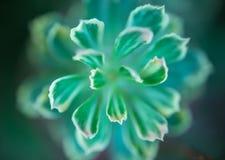 Fondo abstracto - fondo suave del cactus del extracto del foco Imagen de archivo