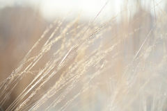 Fondo abstracto: hierba del otoño de la naturaleza Fotos de archivo libres de regalías