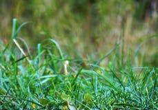 Fondo abstracto, hierba verde Fotografía de archivo